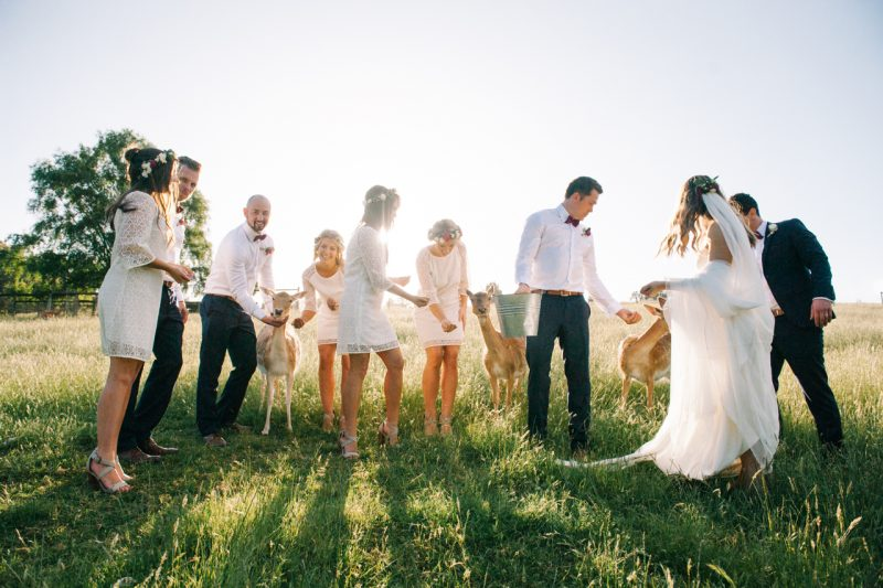 Bridal party at Gum Gully farm by Melbourne wedding photographer Michelle Pragt